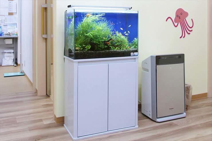 60cm淡水魚水槽特集 華やかな水草レイアウト レンタル事例 メイン画像