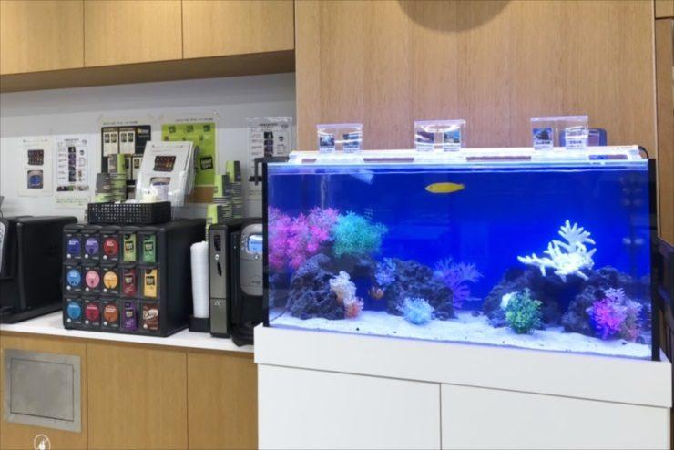 中央区銀座 不動産会社 60cm海水魚水槽 設置事例 水槽画像2