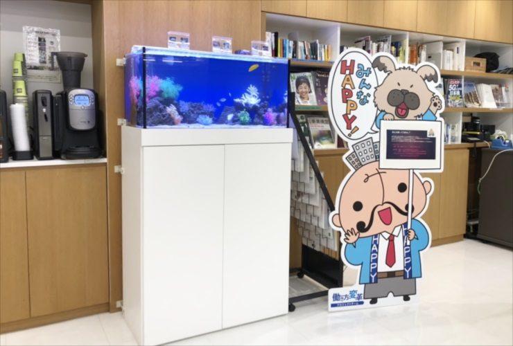 中央区銀座 不動産会社 60cm海水魚水槽 設置事例 水槽画像3