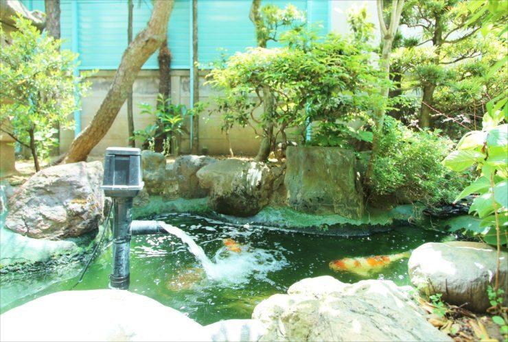 中野区 病院の庭 池のスポットメンテナンス事例 メイン画像