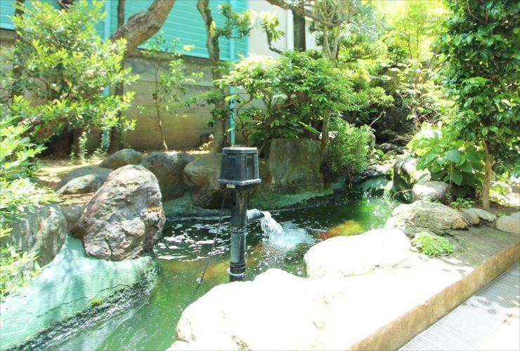 中野区 病院の庭 池のスポットメンテナンス事例 水槽画像2