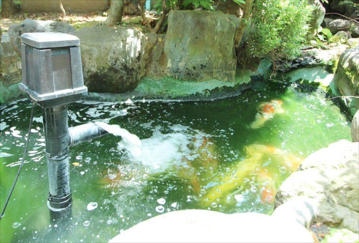 中野区 病院の庭 池のスポットメンテナンス事例 水槽画像3