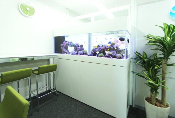 神奈川県相模原市 オフィス事務所 180cm海水魚水槽 設置事例 その後 メイン画像