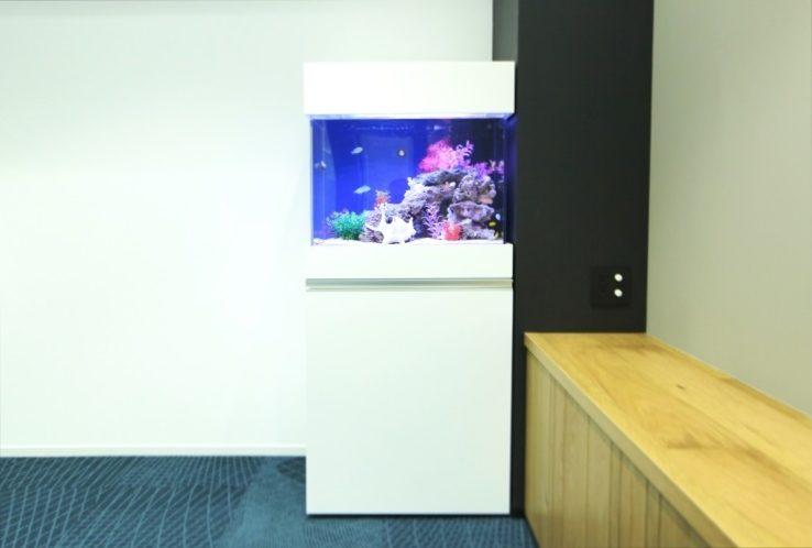 豊島区南池袋 オフィス事務所 60cm海水魚水槽 水槽レンタル事例 メイン画像