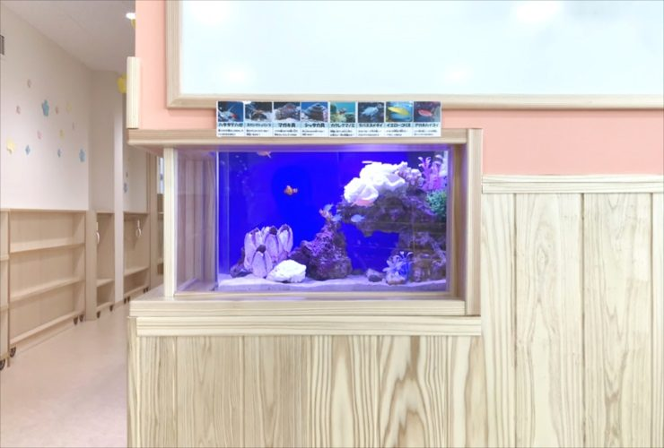 墨田区 保育園のエントランス 60cm海水魚水槽 設置事例 水槽画像2