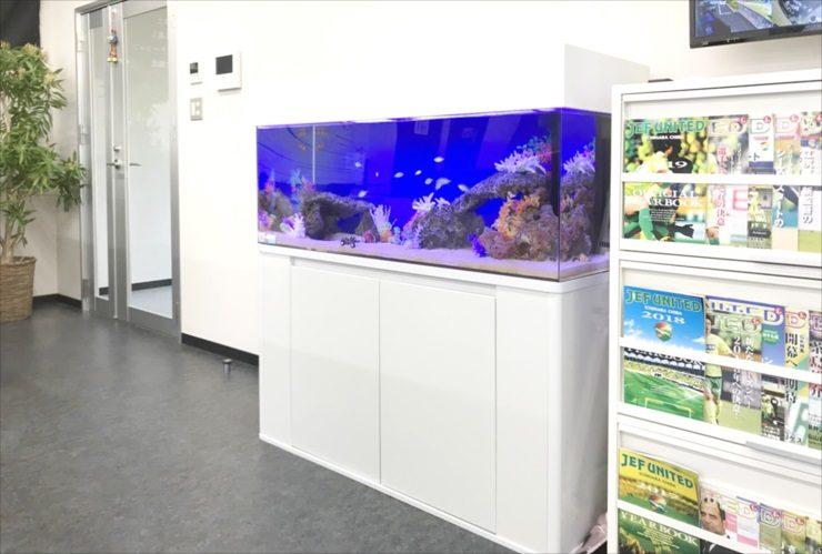 千葉県千葉市 会社事務所 120cm海水魚水槽 設置事例 水槽写真
