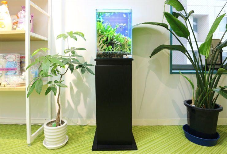 立川市 オフィスの商品展示スペース 30cm淡水魚水槽 お試し設置事例 メイン画像