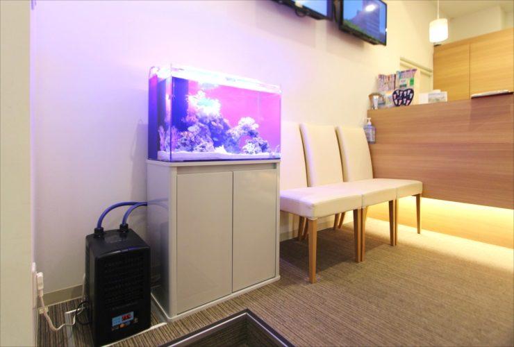茨城県つくば市 歯科クリニック 待合室 60cm海水魚水槽事例 水槽画像1
