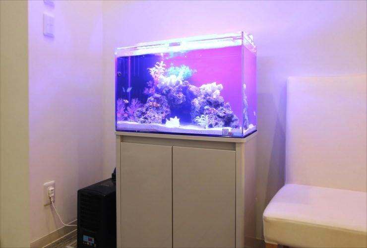 茨城県つくば市 歯科クリニック 待合室 60cm海水魚水槽事例 水槽画像2