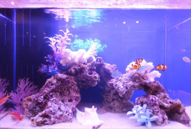 茨城県つくば市 歯科クリニック 待合室 60cm海水魚水槽事例 水槽画像3