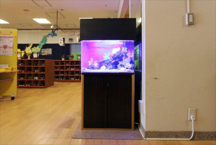 杉並区 保育園のエントランス 60cm海水魚・淡水魚 水槽設置事例 水槽画像2