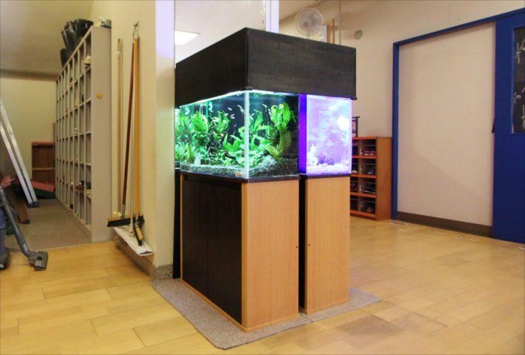 杉並区 保育園のエントランス 60cm海水魚・淡水魚 水槽設置事例 水槽画像3