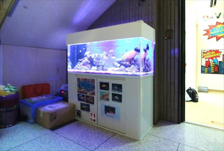港区 オフィス事務所 120cm海水魚水槽設置 メンテナンス事例 メイン画像