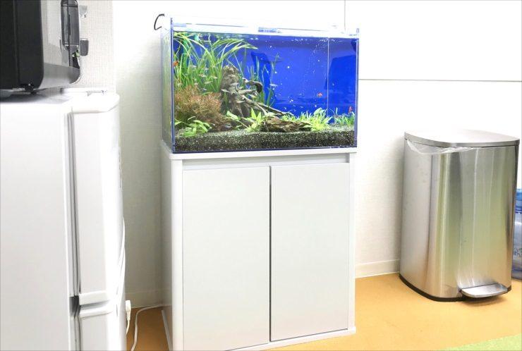 大阪府大阪市 オフィス事務所 60cm淡水魚水槽 設置事例 メイン画像