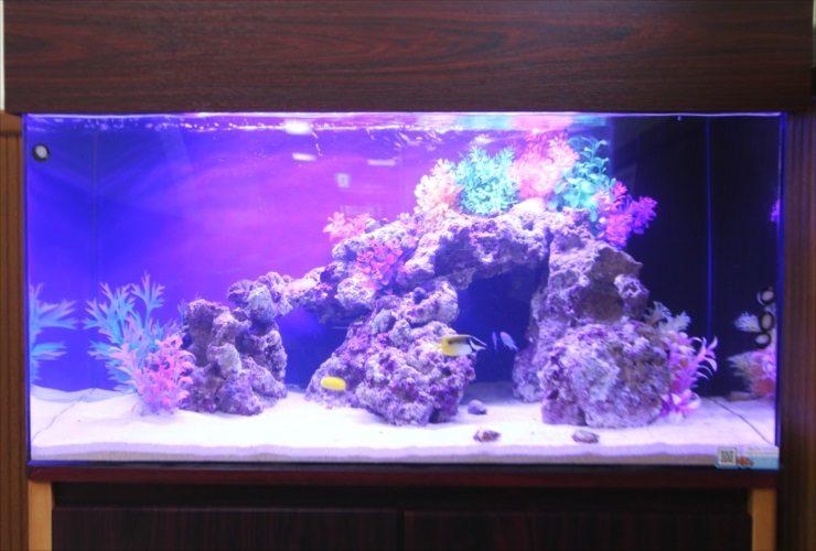青梅市 医院の待合室 90cm海水魚水槽 設置事例 水槽画像2