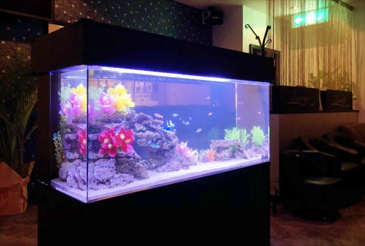 飲食店 カラフルな海水魚水槽