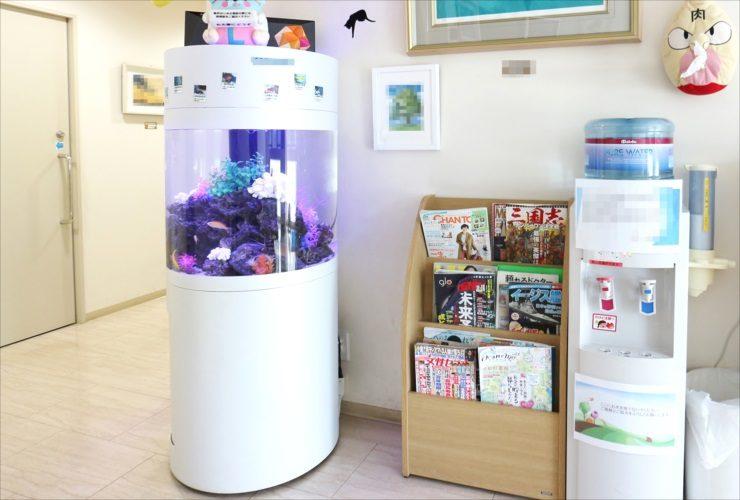 練馬区 皮膚科クリニック 待合室 60cm円柱海水魚水槽 設置事例 水槽画像1