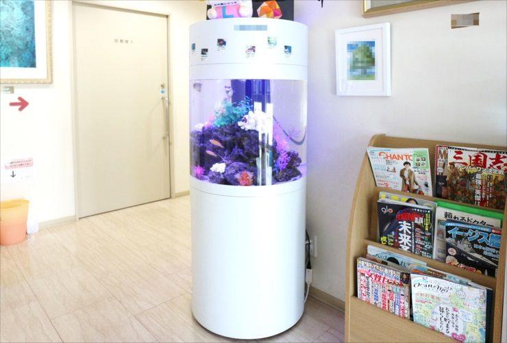 練馬区 皮膚科クリニック 待合室 60cm円柱海水魚水槽 設置事例 水槽画像2