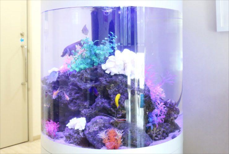 練馬区 皮膚科クリニック 待合室 60cm円柱海水魚水槽 設置事例 水槽画像3