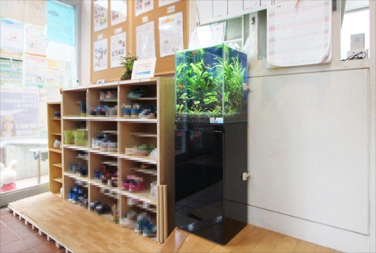 杉並区 保育園のエントランス 30cm淡水魚水槽 設置事例 メイン画像