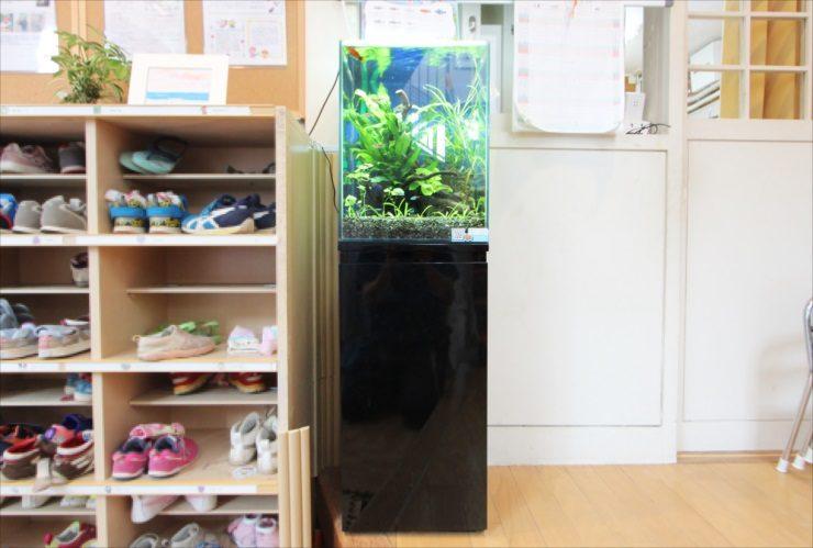 杉並区 保育園のエントランス 30cm淡水魚水槽 設置事例 水槽画像2