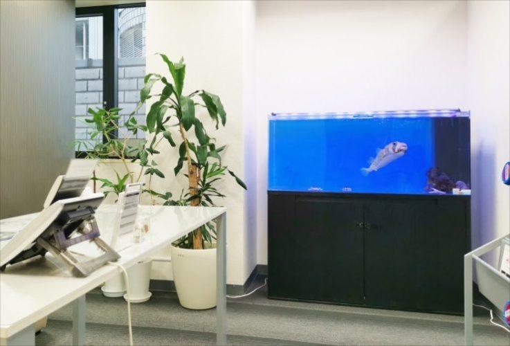 名古屋市 オフィス事務所に設置 120cm海水魚(ハリセンボン)水槽事例 メイン画像