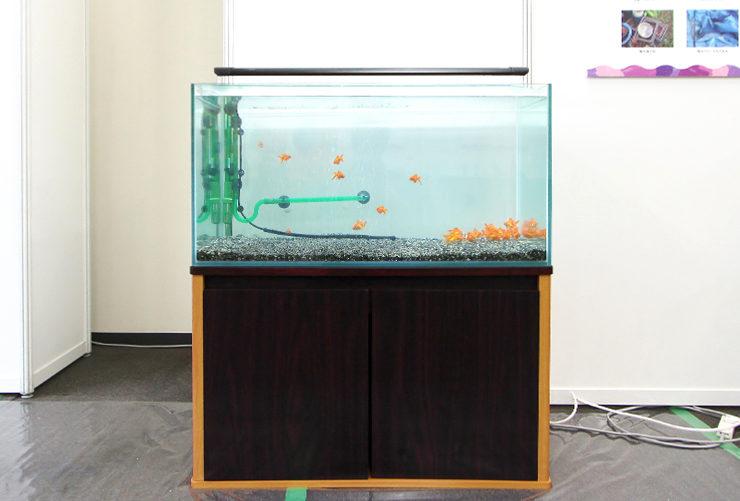 東京 短期イベント  90cm淡水魚水槽 設置事例 メイン画像