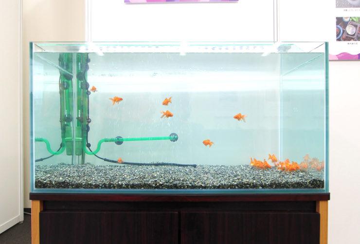 東京 短期イベント  90cm淡水魚水槽 設置事例 水槽画像2
