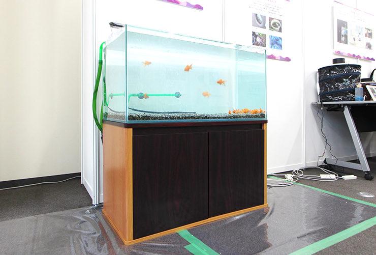東京 短期イベント  90cm淡水魚水槽 設置事例 水槽画像3