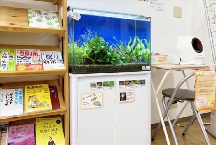 文京区 薬局の待合室 60cm淡水魚水槽 再設置事例 水槽写真