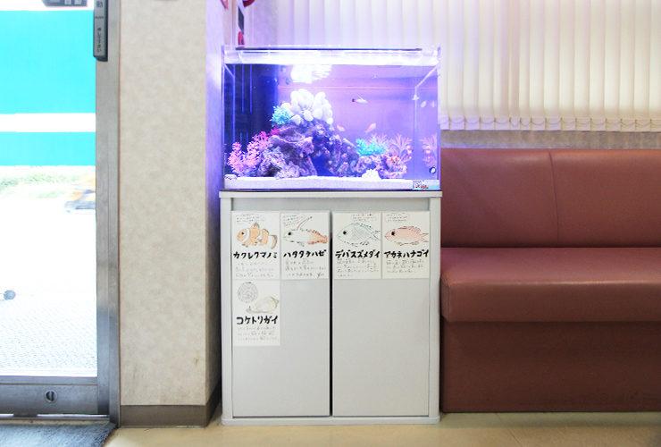 文京区 眼科クリニック 60cm海水魚水槽 設置事例 メイン画像
