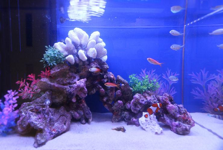 眼科クリニック 60cm海水魚水槽の写真3
