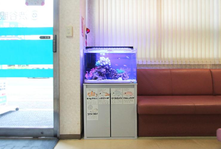 眼科クリニック 60cm海水魚水槽の写真4
