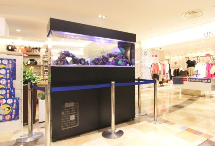 2019年 百貨店短期イベント 150cm海水魚水槽 設置事例