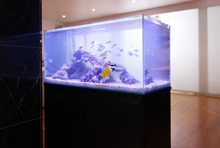 あの「金スマ」に水槽レンタル! 撮影用90cm海水魚水槽 設置事例 メイン画像