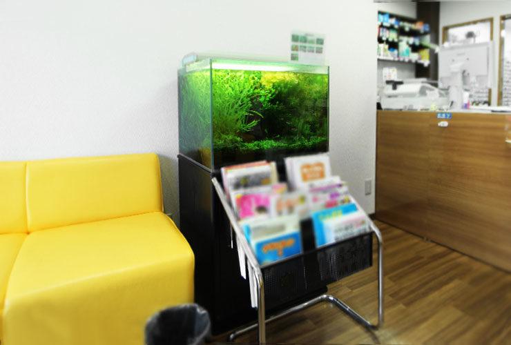 東京都町田市 薬局  60cm淡水魚水槽 設置事例 水槽画像1