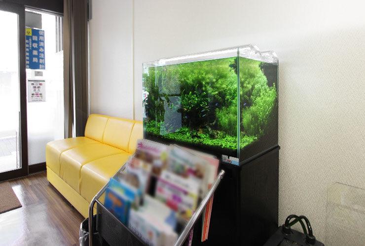 東京都町田市 薬局  60cm淡水魚水槽 設置事例 水槽画像2