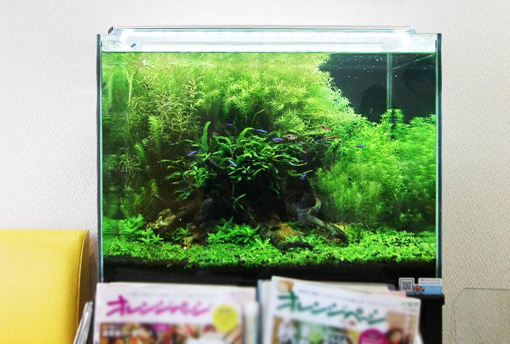 東京都町田市 薬局  60cm淡水魚水槽 設置事例 水槽画像3