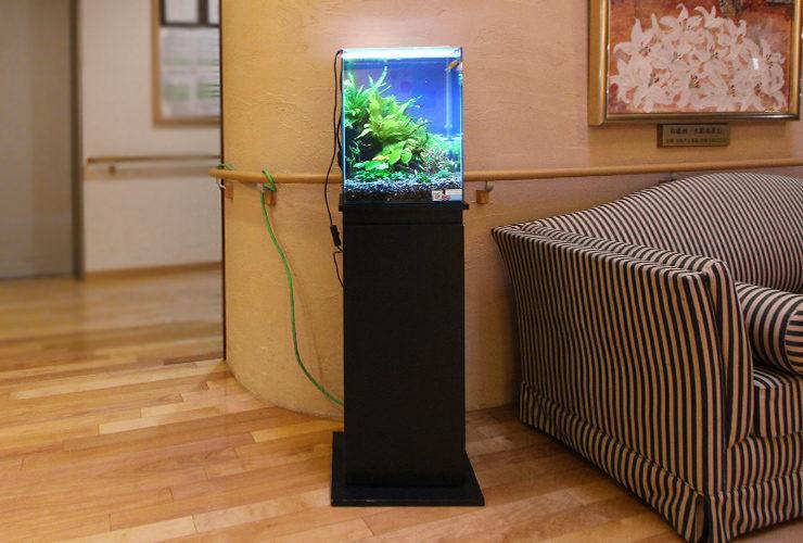 横浜市 特別養護老人ホーム 30cmお試し淡水魚水槽 設置事例 水槽画像1
