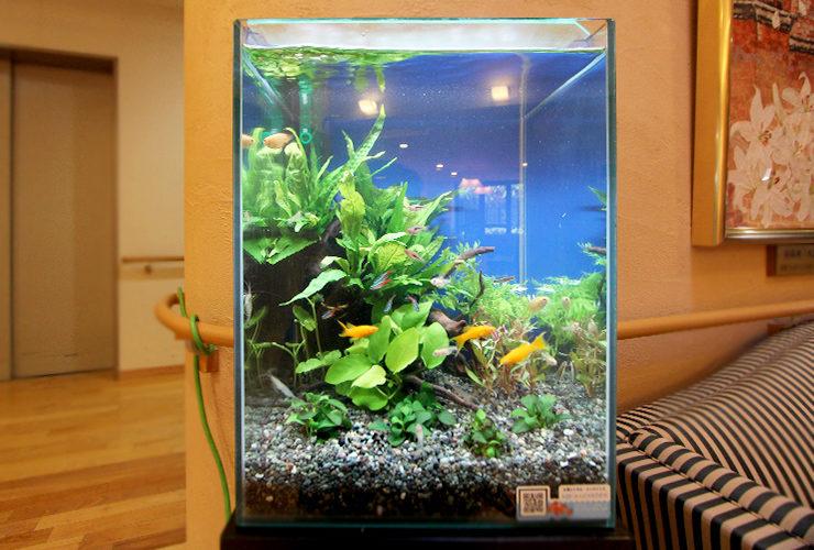 横浜市 特別養護老人ホーム 30cmお試し淡水魚水槽 設置事例 水槽画像2