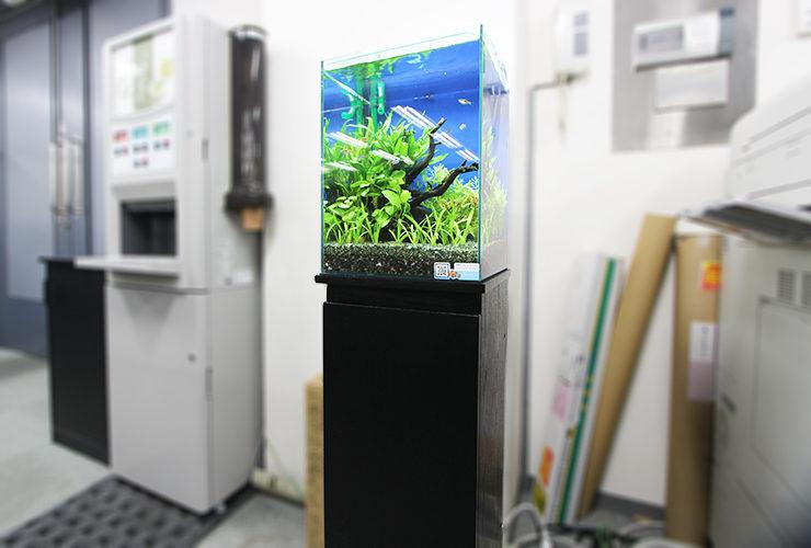 東京都港区 オフィス 30cmお試し淡水魚水槽 レンタル事例 メイン画像