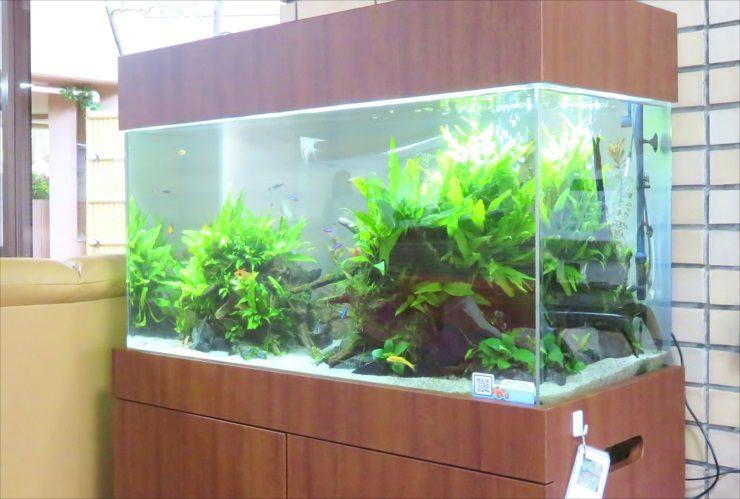 老人ホームのエントランスフロア 90cm淡水魚水槽 設置事例 水槽画像3