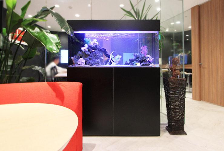 千代田区 オフィスのエントランス 120cm海水魚水槽 その後 メイン画像