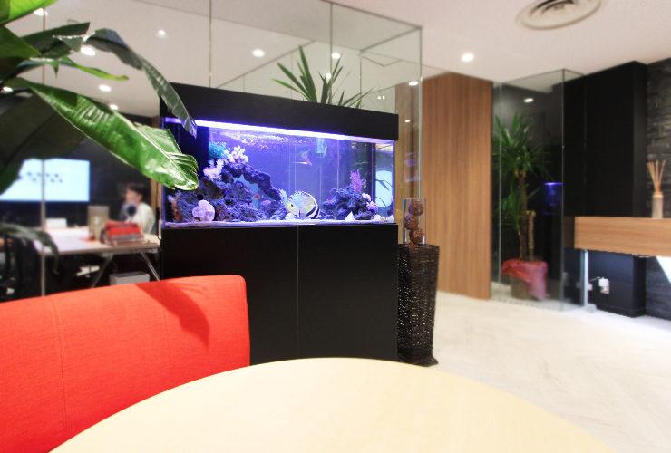 オフィス 海水魚水槽