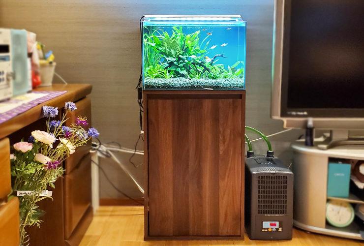 個人宅のリビング 45cm淡水魚水槽 設置事例 メイン画像