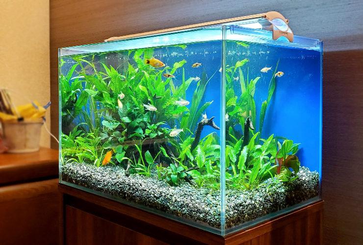 個人宅のリビング 45cm淡水魚水槽 設置事例 水槽画像2