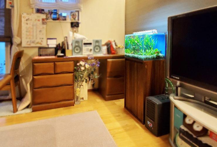 個人宅のリビング 45cm淡水魚水槽 設置事例 水槽画像3