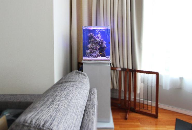 個人宅のリビング 30cm海水魚水槽 設置事例 メイン画像