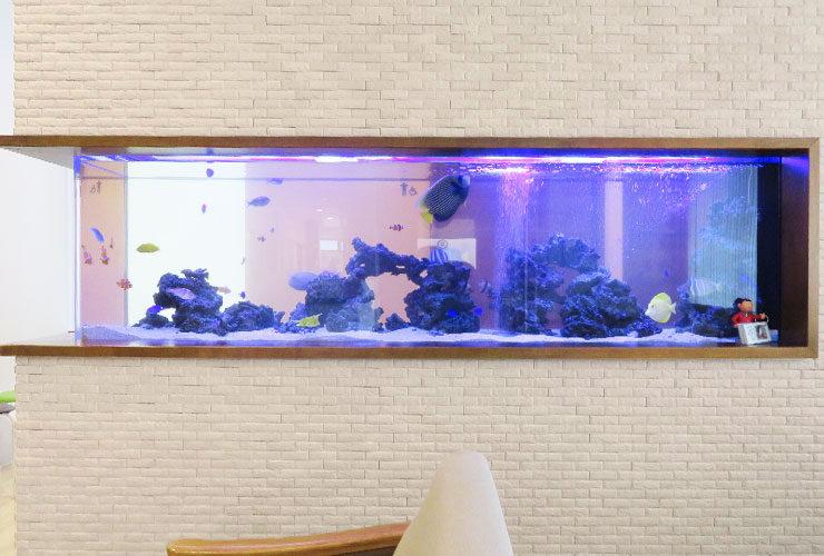 愛知県丹波郡 整形外科の待合室 220cm海水魚水槽 その後 メイン画像