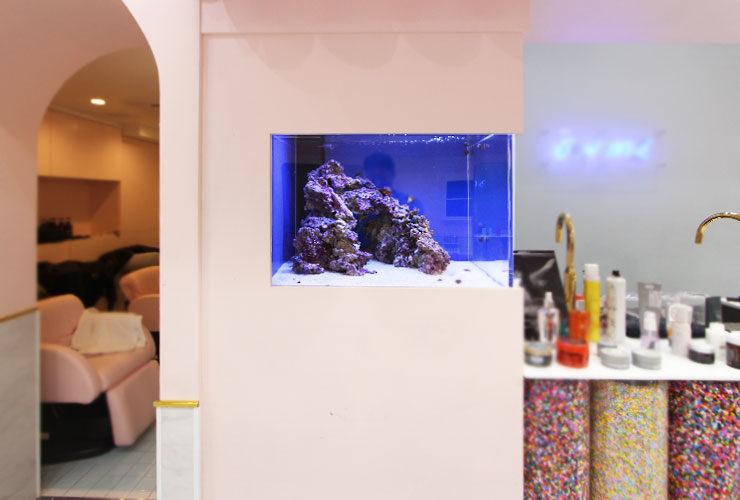 神奈川県横浜市 美容室 60cm海水魚水槽 水槽変更事例 水槽画像2